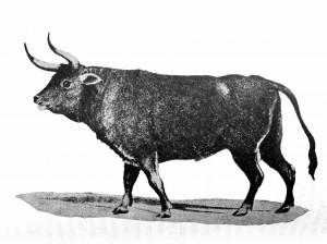Imagen del posible bos primigenius encontrada por el zoólogo H. Smith, según Ortega y Gasset