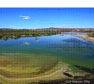 El nicho ecológico del Salar de Los Canos