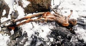 Hombre de Ötzi, momia de un hombre que vivió hace 5300 años, encontrado congelado en los Alpes